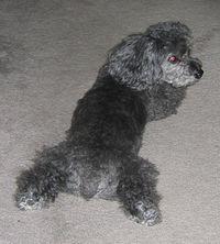 Cute dog butt - Lucky