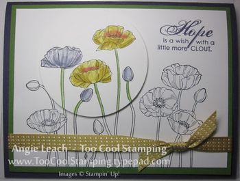 Last thurs - poppies hope 3